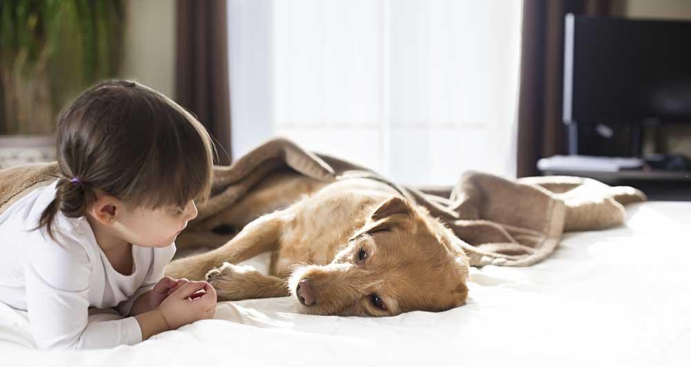 Sick-Dog-with-Girl-464205779